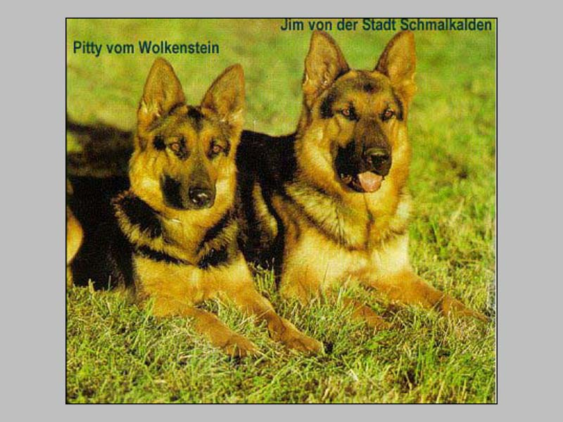 Enlarge Picture - PITTY VOM WOLKENSTEIN (OST)