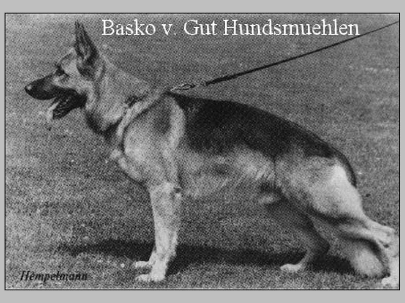 Enlarge Picture - BASKO VOM GUT HUNDSMüHLEN