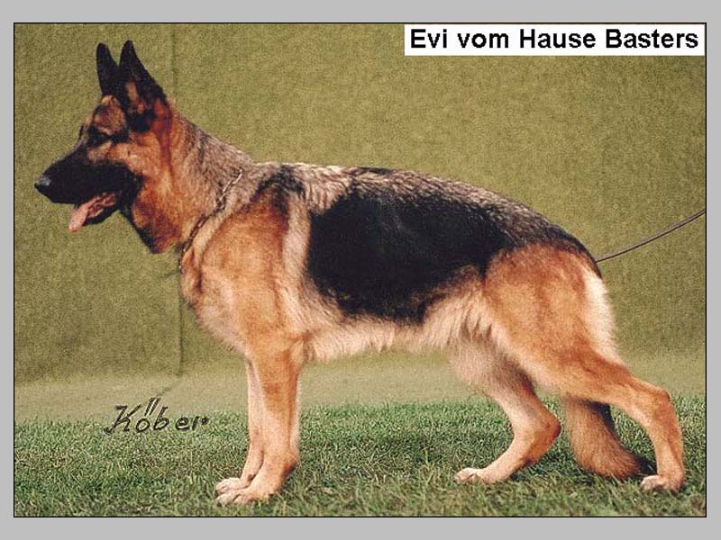 Enlarge Picture - EVI VOM HAUSE BASTERS