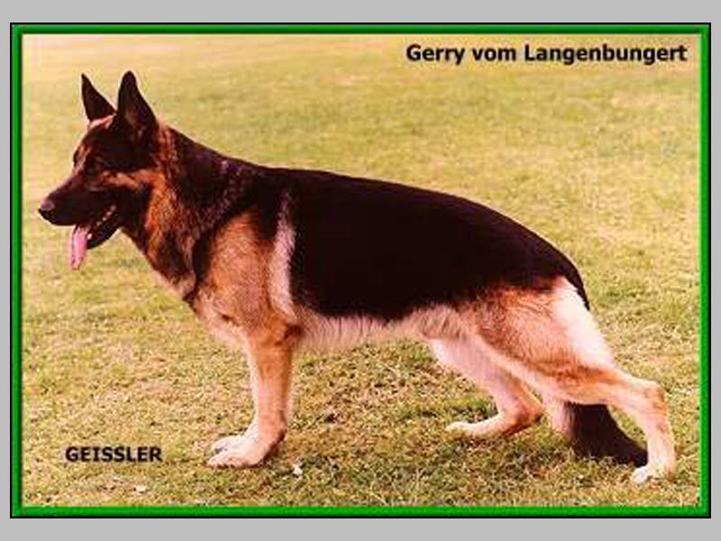 Enlarge Picture - GERRY VOM LANGENBUNGERT