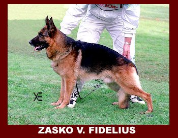 Enlarge Picture - ZASKO VON FIDELIUS