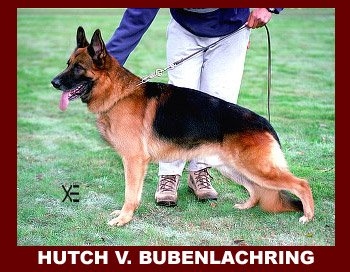 Enlarge Picture - HUTCH VOM BUBENLACHRING