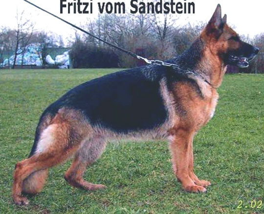 Enlarge Picture - FRITZI VOM SANDSTEIN