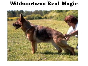 Enlarge Picture - REAL MAGIC WILDMARKENS