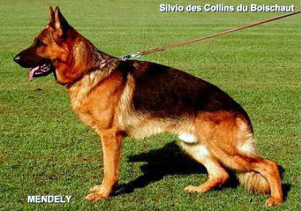 Enlarge Picture - SILVIO DES COLLINES DU BOISCHAUT
