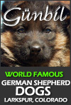 Gunbil German Shepherd Dogs