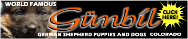 World famous, world class Gunbil German Shepherds and German shepherd puppies